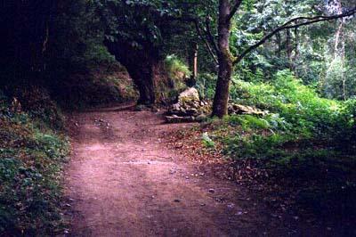 sarria-bosque0001
