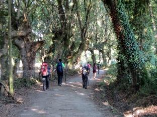 Sarria Portomarín 23 septiembre 2013 zona boscosa