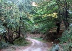 Triacastela Sarria 22 septiembre 2013 Vereda en el bosque
